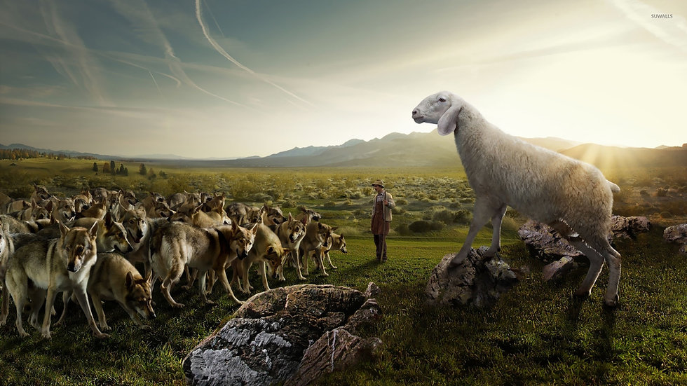 sheep-attacking-the-wolves-21035-1920x10