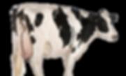 veecentrale-koeien-klein-3b.png