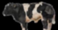 veecentrale-koeien-klein-4.png