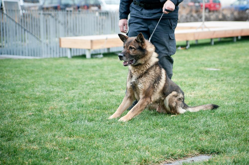 Obsin Dog Patrol Security
