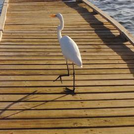 Trellis Bay resident