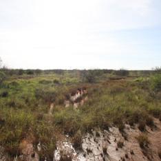 Wheatstone Gas Project Rare Flora Survey