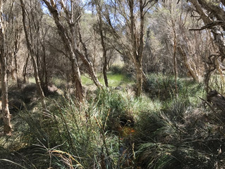 Perth's Wetlands Need Love