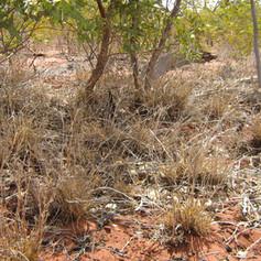 Mesa A Sandsheet PEC Weed Monitoring
