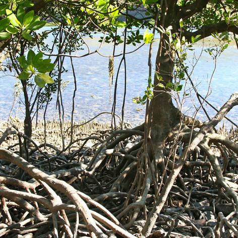 Port Hedland Harbour Mangrove Assessment