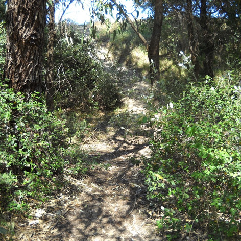 Wetland Flora, Fauna and Weed Survey