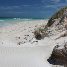 Lancelin DTA Ecological Assessment