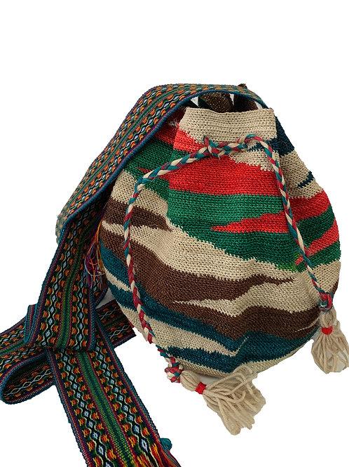 Shigra multicolor Africa