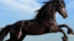 horse-06.jpg