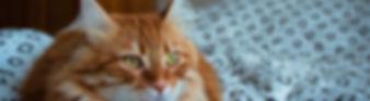 טוקסופלסמה בחתולים נשים בהריון