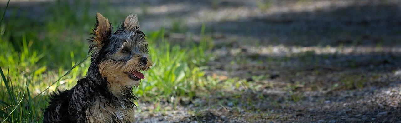 וטרינר גני תקווה; וטרינר בקריית אונו; גזעי כלבים וטרינר