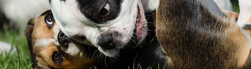 חיסון לכלב בקריית אונו וגני תקווה