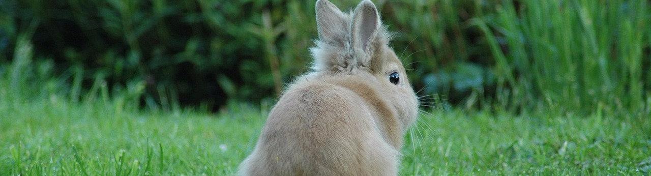 וטרינר לארנבון בקריית אונו