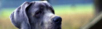 גידולי עטין בכלבה