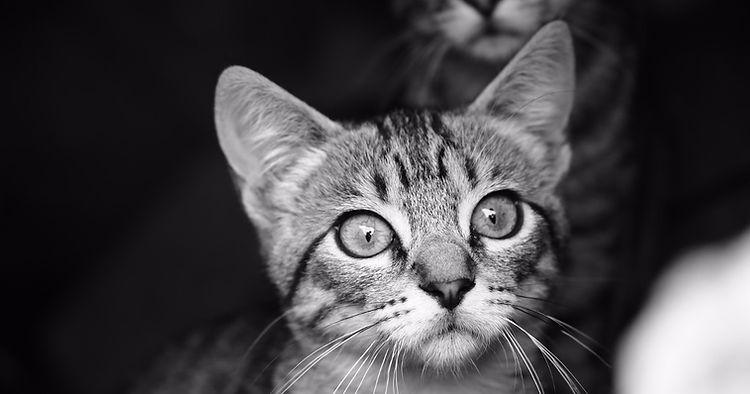 דלקת מערכת נשימה עליונה בחתולים