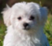 פרוו בכלב וטרינר
