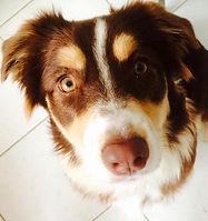 חיסון לכלב בסביון