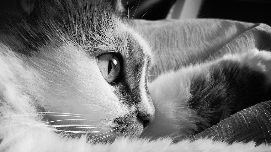 מרפאה וטרינרית לכלבים וחתולים