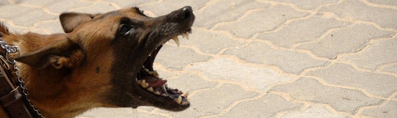 וטרינר חרדת נטישה בכלבים
