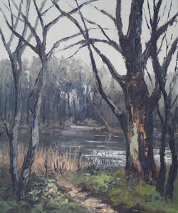 Marais à Oisy-le-Verger