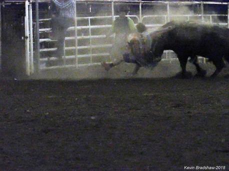 Bull-hit-opt.jpg