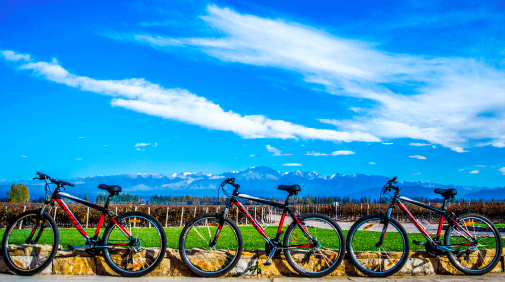 Wine bike tours