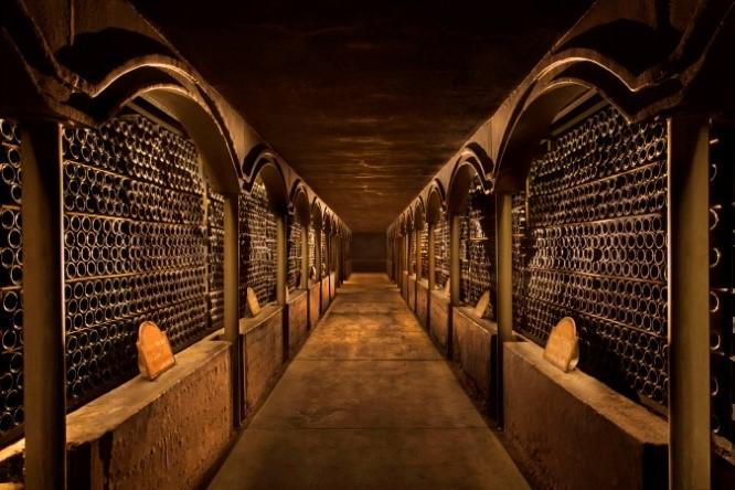 Experiencia con raices vitivinícolas $3000