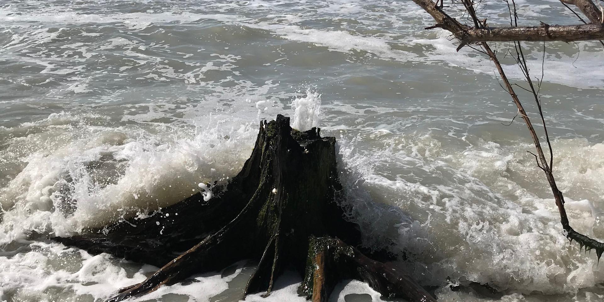 Sanibel Stump