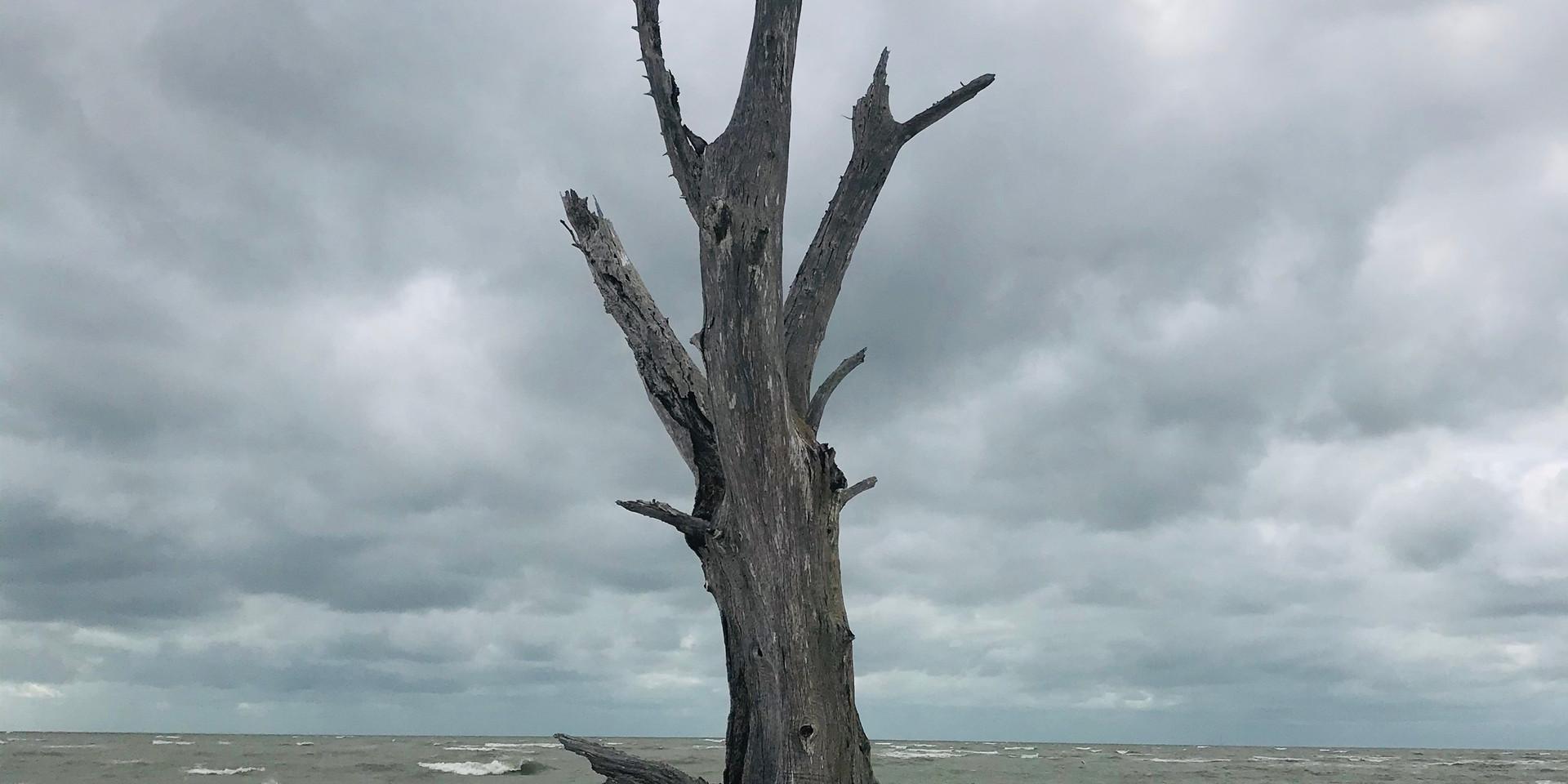 Dead Tree at Lovers Key