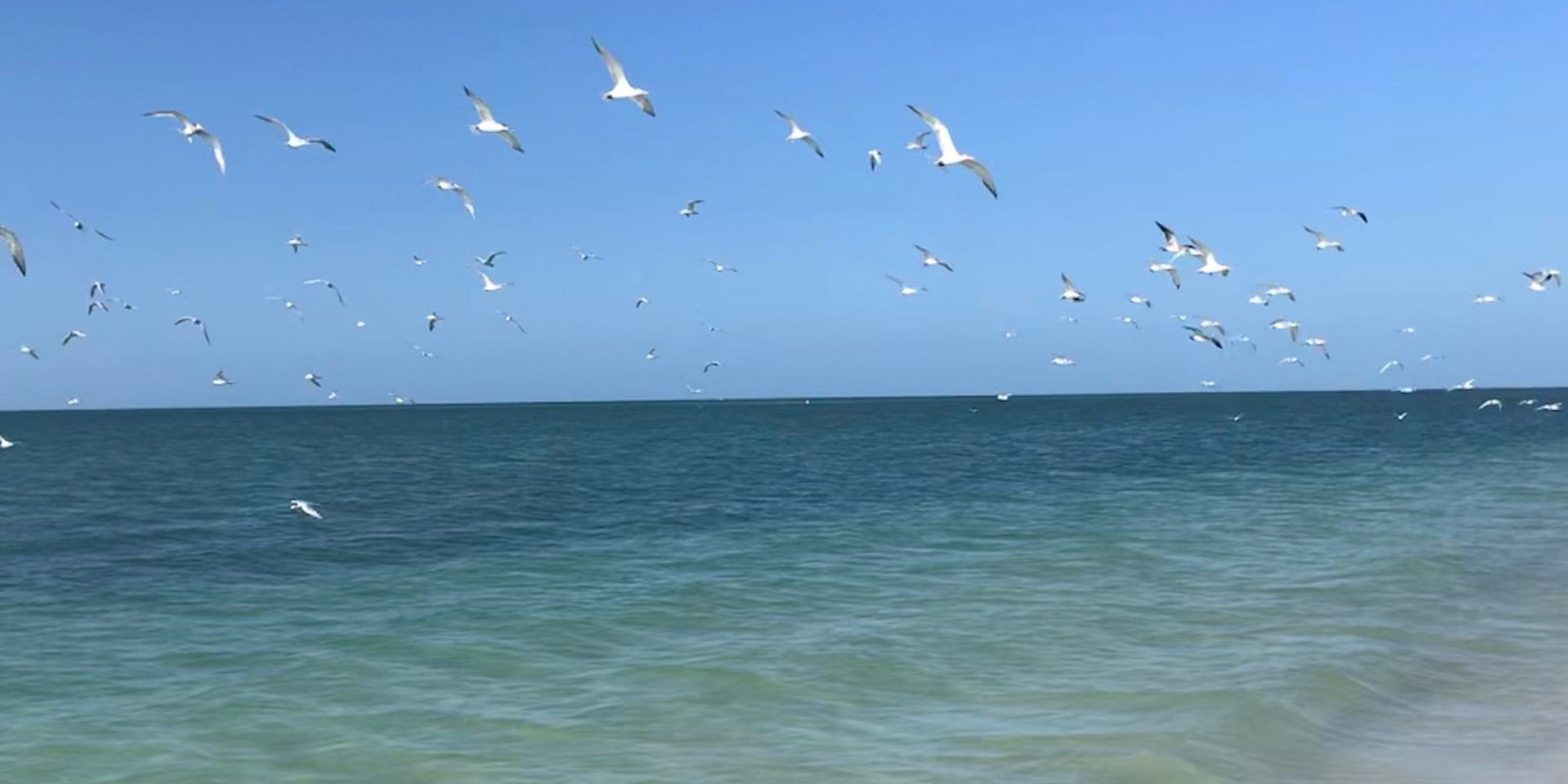 South Fort Myers Beach Birds