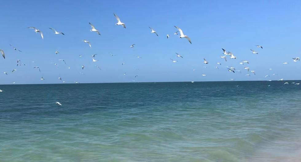 South Fort Myers Beach Birds