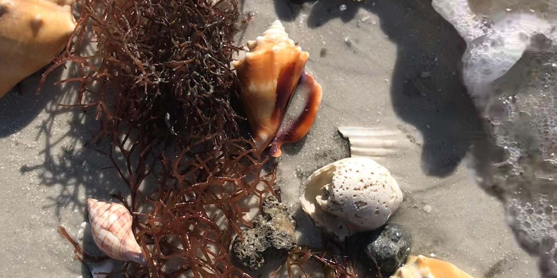 Beach Goodies