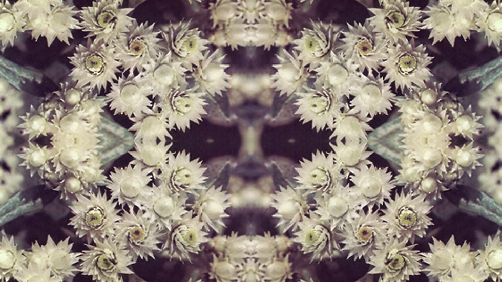 FABRIC PRINT: Pearl (order this print as fabric)