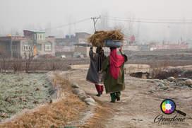 Kashmiri women working in the field, Kas