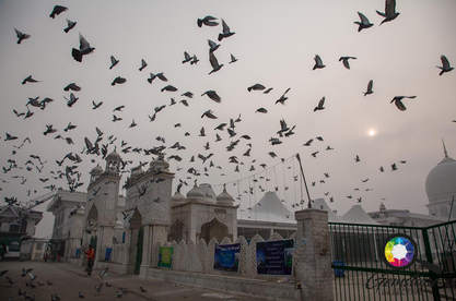 Flocks of birds fly over the palace in K
