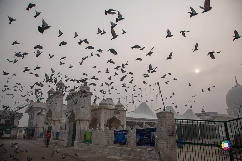 Pigeon stampede | www.gemstonedetective.com