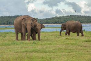 Yala National Park | www.gemstonedetective.com
