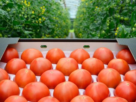 ふるさと納税で清水農園の野菜の返礼品を|おいしい新鮮な野菜をご自宅にお届けします!