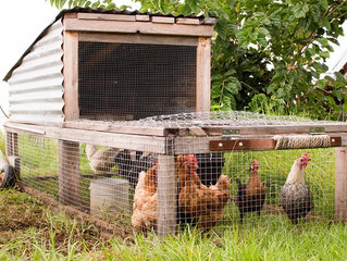 Can You Make Money With Pastured Eggs?