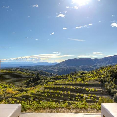 Terrace overlooking the vineyards.jpg