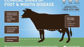 Stopping Foot & Mouth Disease in its Tracks