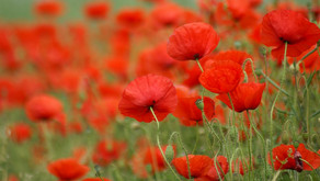 100 Years On, We Remember