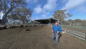 The Aussie Lamb Story Never Looked So Good