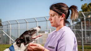 Prisoners And Pups Showing on Regional Screens