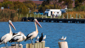 Council Catch Up: Coorong, SA