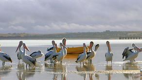 Council Catch Up: Streaky Bay, SA