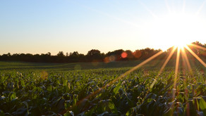 Have Your Say on GM Food Crops in SA