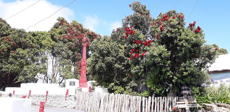 Pohutukawa im Dorf Whakarewarewa