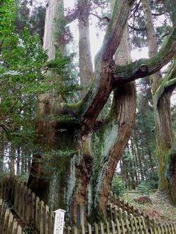 幣立神社の森
