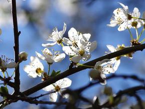 Digitale Voorjaarsbijeenkomst 29 april